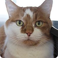 Adopt A Pet :: Bobo - Naperville, IL