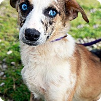 Adopt A Pet :: Marston - available 4/30 - Sparta, NJ