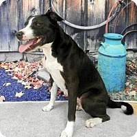 Adopt A Pet :: Sasha - Tyler, TX