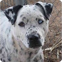 Adopt A Pet :: Sam - Las Cruces, NM