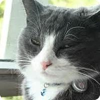 Adopt A Pet :: Diamond - Lancaster, MA
