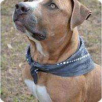 Adopt A Pet :: Cam - Orlando, FL