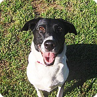Adopt A Pet :: Brandi - Jacksonville, FL