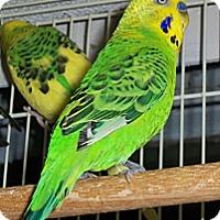 Adopt A Pet :: Ricky - Lenexa, KS