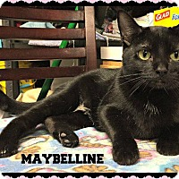 Adopt A Pet :: Maybelline - Valley Park, MO