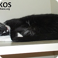 Adopt A Pet :: Nikos - Elizabeth City, NC