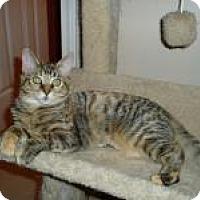 Adopt A Pet :: Tootsie - Little Rock, AR
