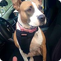 Adopt A Pet :: Jada Rose - Hockessin, DE