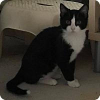 Adopt A Pet :: Samona - Huntley, IL