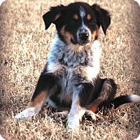 Adopt A Pet :: Maximus - Westport, CT