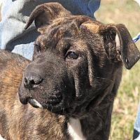 Adopt A Pet :: Francesca - Germantown, MD