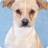 Adopt A Pet :: Scuttle - Encinitas, CA