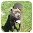 Photo 3 - Pit Bull Terrier Mix Dog for adoption in Petaluma, California - Remi