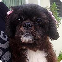 Adopt A Pet :: Josie - Davie, FL