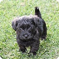 Adopt A Pet :: Tabitha - La Habra Heights, CA
