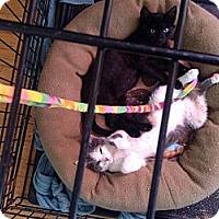Adopt A Pet :: Alice - Houston, TX
