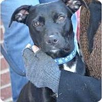 Adopt A Pet :: Lucy - Nashville, TN