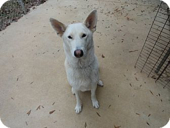 German Shepherd Dog Mix Dog for adoption in Ozark, Alabama - Brigitte