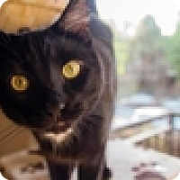 Adopt A Pet :: Bocephus - Vancouver, BC