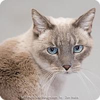 Adopt A Pet :: Shanti - Fountain Hills, AZ