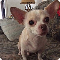Adopt A Pet :: Duke in CT - Manchester, CT