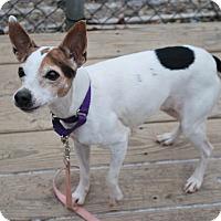 Adopt A Pet :: Cookie - Berea, OH