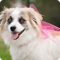 Adopt A Pet :: Gretel - Santa Fe, TX