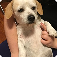 Adopt A Pet :: Chief - Port Richey, FL