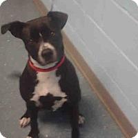 Adopt A Pet :: Nena - St. Cloud, FL
