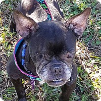 Adopt A Pet :: McGee - Mary Esther, FL