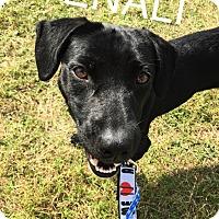 Adopt A Pet :: Denali - Converse, TX