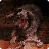 Adopt A Pet :: Mesa - Ada, MN