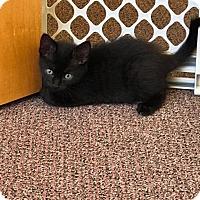 Adopt A Pet :: Tec - Leonardtown, MD