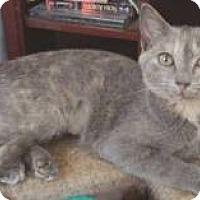Adopt A Pet :: Bijou - Miami, FL