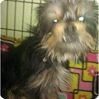 Adopt A Pet :: Brent - Phoenix, AZ