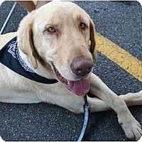 Adopt A Pet :: Jacob - Cumming, GA