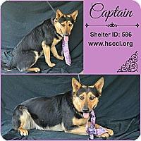 Adopt A Pet :: Captain - Plano, TX