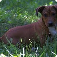 Adopt A Pet :: Marco ($200 adoption fee) - Staunton, VA