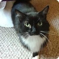 Adopt A Pet :: India - Vancouver, BC