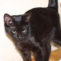 Adopt A Pet :: K-Sabrina2-Onyx - Colorado Springs, CO