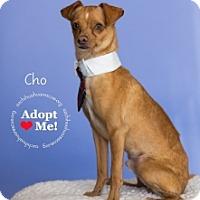Adopt A Pet :: Cho - Mesa, AZ