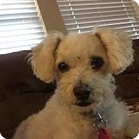 Adopt A Pet :: Athena - San Antonio, TX