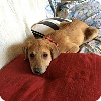 Adopt A Pet :: Tom Petty - Austin, TX