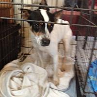 Adopt A Pet :: Lewis - Shannon, GA