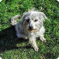 Adopt A Pet :: PETUNIA - Hurricane, UT