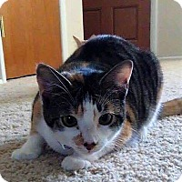Adopt A Pet :: Simone - Savannah, GA