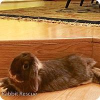 Adopt A Pet :: Sugar - Livermore, CA