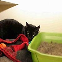 Adopt A Pet :: EWOK - Pittsburgh, PA