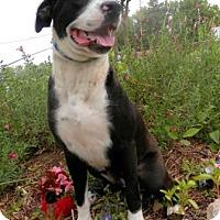 Adopt A Pet :: Donna - Tyler, TX