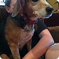 Adopt A Pet :: Louise - Conway, AR